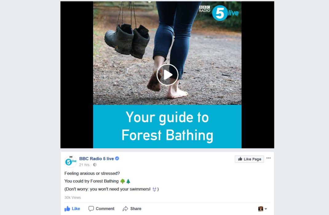 This is Forest Bathing