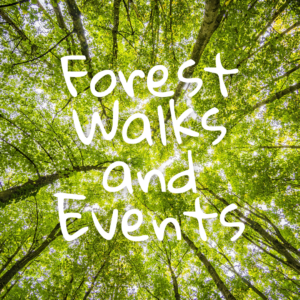 Forest walks and events with Faith Douglas